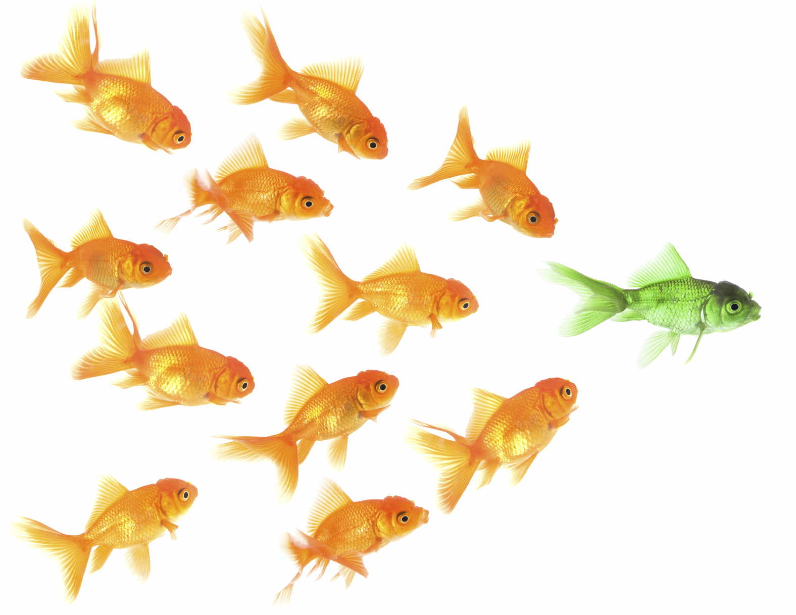 3 simple rules to stay on top of your game campus to career for What are the rules for go fish