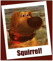 Regain Your Focus: Stop Chasing Squirrels!!