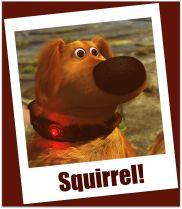 Regain Your Focus: Stop Chasing Squirrels!!